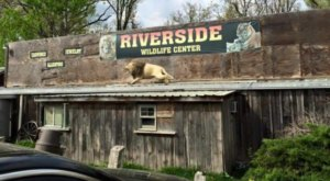 Visit Lions, Tigers, And Gators At This Awesome Wildlife Center In Missouri