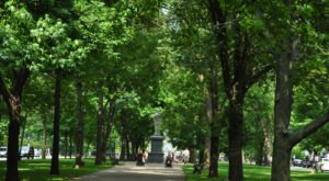 Boston's Tunnel Of Trees Is Positively Magical And You Need To Visit