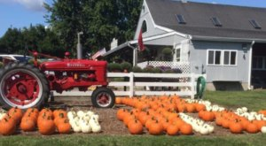 These 8 Charming Pumpkin Patches In Connecticut Are Picture Perfect For A Fall Day