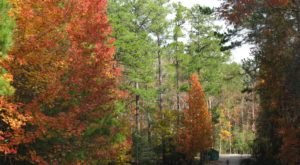 7 Picture Perfect Fall Day Trips To Take In Louisiana