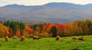 The Hidden Restaurant In Vermont That's Surrounded By The Most Breathtaking Fall Colors