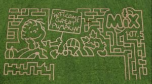 Get Lost In These 8 Awesome Corn Mazes In New Mexico This Fall