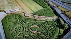 Get Lost In These 8 Awesome Corn Mazes In Washington This Fall