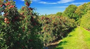 These 10 Charming Apple Orchards In Massachusetts Are Great For A Fall Day