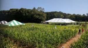 One Of The Largest Corn Mazes In The Southeast Is Right Here In North Carolina
