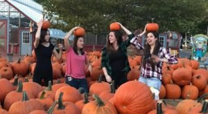 These 8 Charming Pumpkin Patches In Philadelphia Are Picture Perfect For A Fall Day