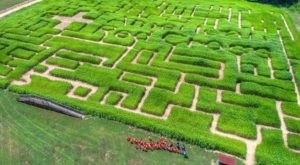 Get Lost In These 7 Awesome Corn Mazes In North Carolina This Fall