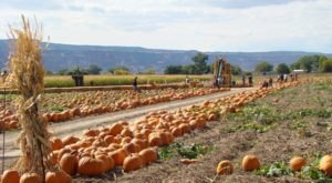It's Not Fall Until You Visit The Largest Pumpkin Farm In Colorado