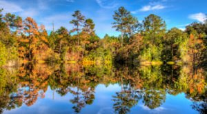 The Best Times And Places To View Fall Foliage In Florida