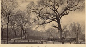 The Sinister Story Behind This Popular Boston Park Will Give You Chills