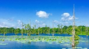 This Underrated Hiking Trail In Louisiana Leads To Jaw-Dropping Views