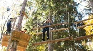 Take A Canopy Tour At Pocono Tree Ventures In Pennsylvania To See The Fall Colors Like Never Before