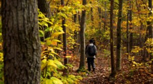 10 Short And Sweet Fall Hikes In Massachusetts With A Spectacular End View