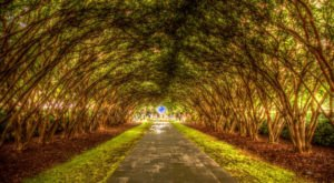 Dallas – Fort Worth's Tunnel Of Trees Is Positively Magical And You Need To Visit