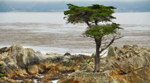 The 8 Best Stops Along Northern California's Most Beautiful Drive