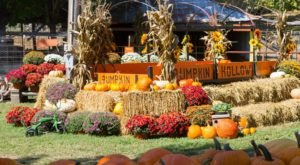These 10 Charming Pumpkin Patches In Arkansas Are Picture Perfect For A Fall Day