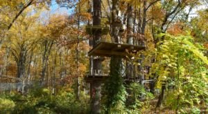 Take A Canopy Tour At The Adventure Park At Sandy Spring In Maryland To See The Fall Colors Like Never Before