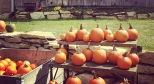 These 9 Charming Pumpkin Patches In North Carolina Are Picture Perfect For A Fall Day