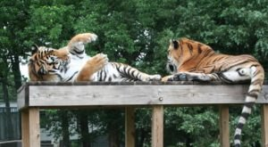 Not Many Know About This Exotic Animal Sanctuary Near Kansas City