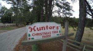This Christmas Farm In Georgia Will Positively Enchant You This Season