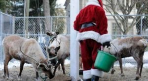 This Reindeer Festival In Connecticut Will Positively Enchant You This Season