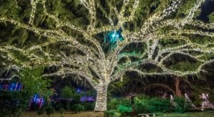 Take An Enchanting Winter Walk Through Brookgreen Gardens In South Carolina