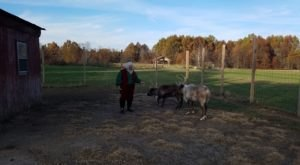 This Reindeer Farm In Ohio Will Positively Enchant You This Season