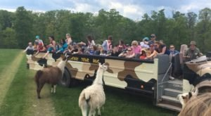 There's A Wildlife Park In Pennsylvania That's Perfect For A Family Day Trip