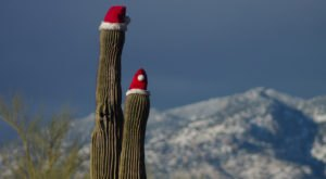 8 Weird And Wacky Holiday Traditions You'll Only Get If You're From Arizona