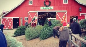 This Merry Farm Is The Best Place In Indiana To Buy Your Christmas Tree