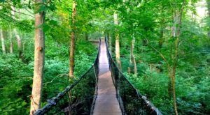 The Stomach-Dropping Suspended Bridge Walk You Can Only Find In Massachusetts