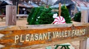 This Christmas Farm In Oklahoma Will Positively Enchant You This Season