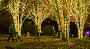 The Magical Tennessee Garden That Comes Alive With Light Each Winter