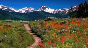 You'll Want To Add This Enchanting Wildflower Trail To Your Hiking Bucket List