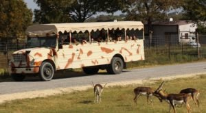 Not Many Know About This Exotic Animal Sanctuary Near Dallas – Fort Worth