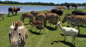 There's A Wildlife Park Near New Orleans That's Perfect For A Family Day Trip
