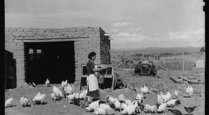 There's Something Special About These 14 New Mexico Farms From The Past