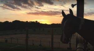 The Winter Horseback Riding Trail Near Charlotte That's Pure Magic
