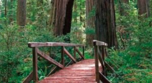 These 11 Photos Of California's Redwood Forest Will Simply Amaze You