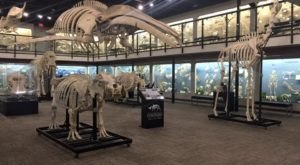 There's A Museum Filled With Skeletons In Oklahoma And It's Nothing Short Of Amazing