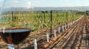 This Wine Valley Tucked Away In Idaho Is A True Hidden Gem