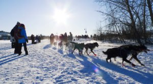 This Sled Dog Race Between Alaska And Canada Is A Wild Ride You Have To See