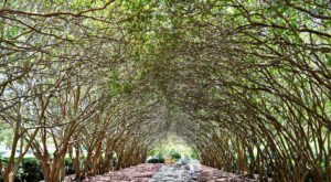 6 Positively Magical Tree Tunnels In Texas That Will Take Your Breath Away
