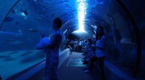 The Incredible Underwater Tunnel In Hawaii Where You Can Experience Incredible Sea Life