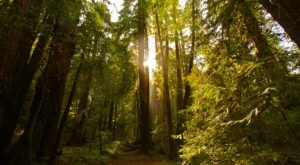 Here's Northern California's Top Outdoor Attraction And You'll Definitely Want To Do It