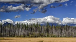 10 Quirky Facts About Montana We're Proud To Embrace
