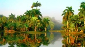 Fairchild Tropical Garden In The U.S. Is A Little Slice Of Heaven