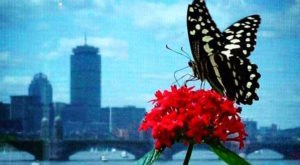 You'll Want To Plan A Day Trip To Boston's Magical Butterfly House