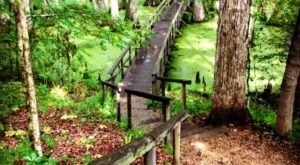 This Quaint Little Trail Is The Shortest And Sweetest Hike In Mississippi