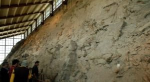 The Epic Park In Colorado Where You Can Take Home 100-Million-Old Fossils